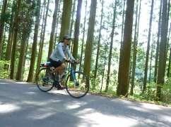 Gujo Hachiman cedar forests