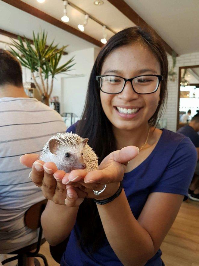 Tokyo: Harry Hedgehogs